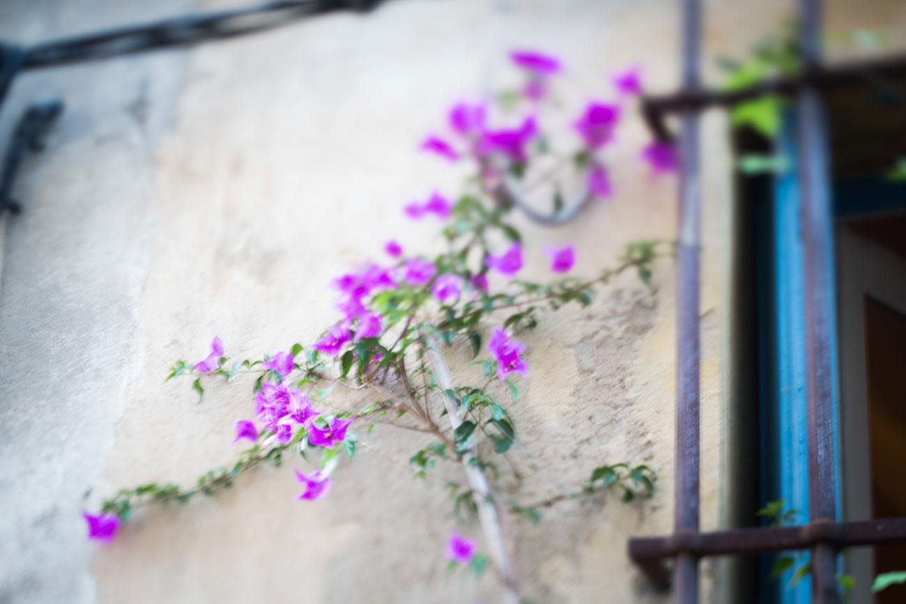 Provence-2016-112-Kopie
