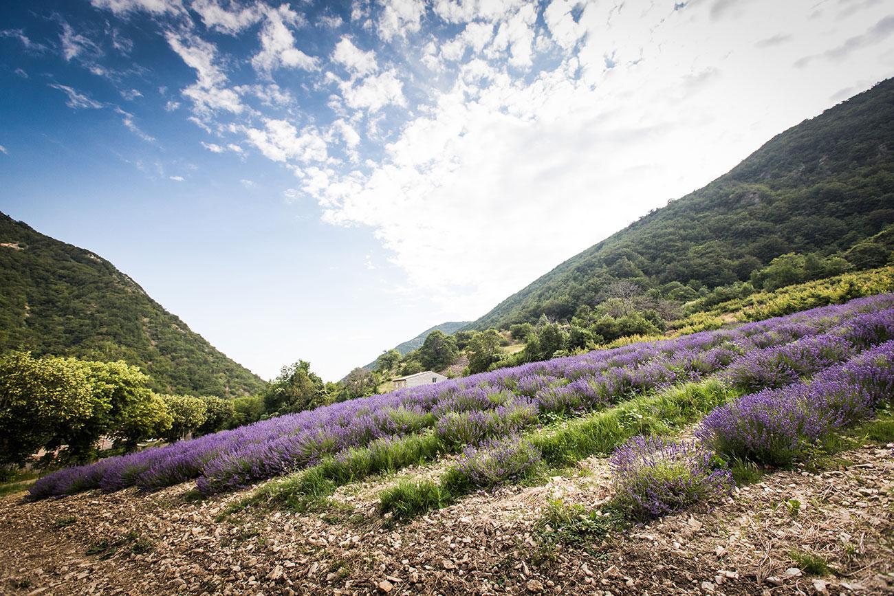 Provence-2016-163-Kopie