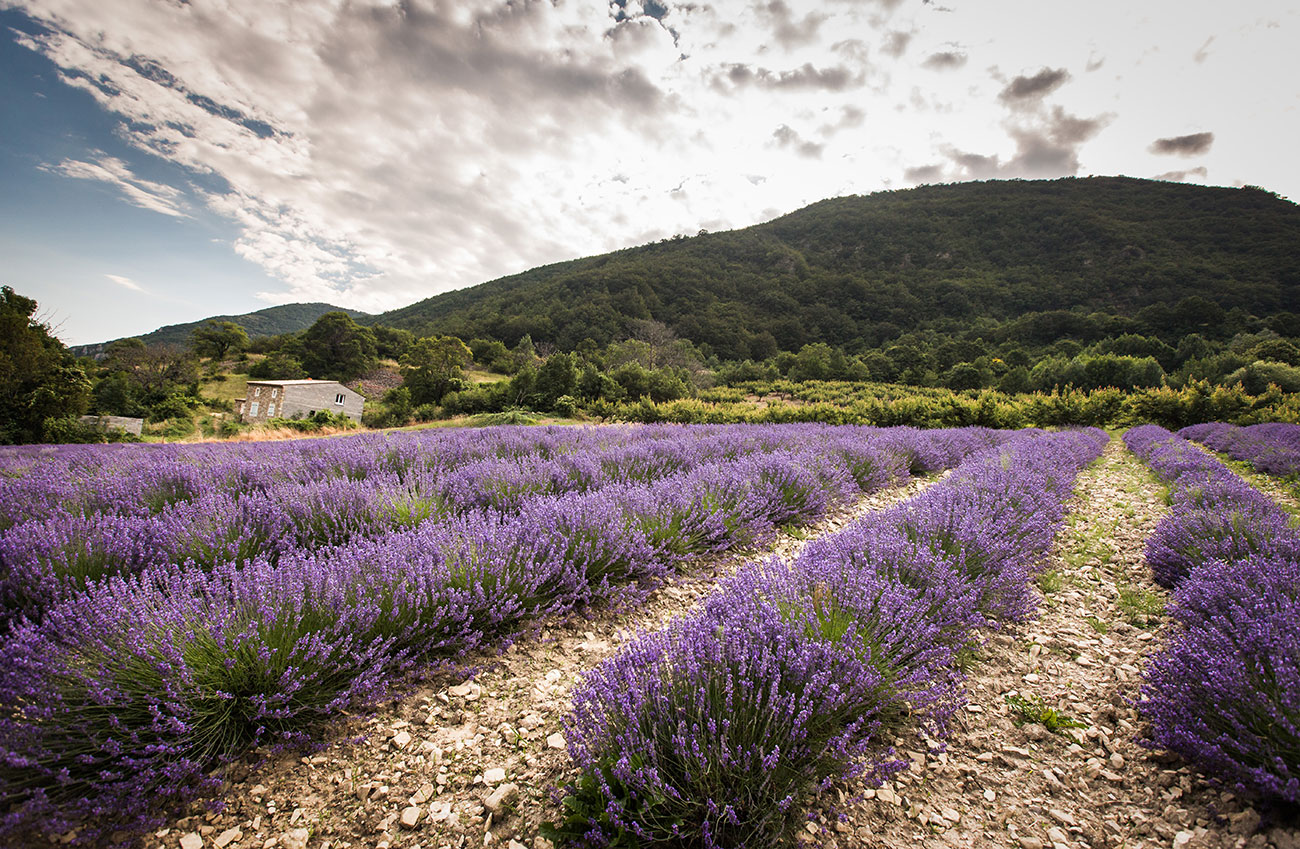 Provence-2016-171-Kopie