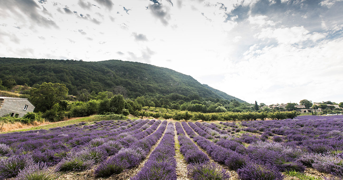 Provence-2016-174-Kopie